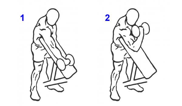 CURL COM BARRA EZ - Treino De Biceps