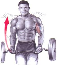 CURL DE BICEPS UNILATERAL COM CABO - Treino De Biceps