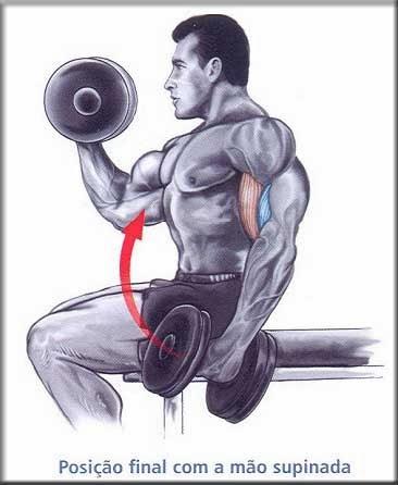 Treino para bíceps: dicas e exercícios - Hipertrofia 1