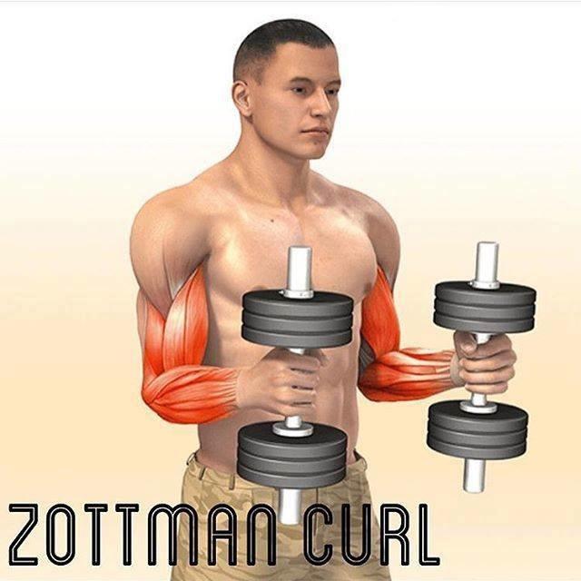 Exercícios de bíceps foto 5
