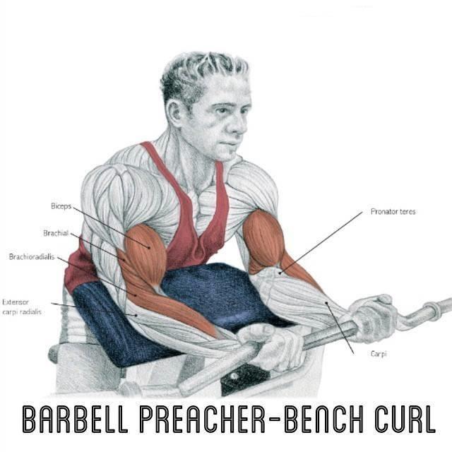 Exercícios de bíceps foto 7
