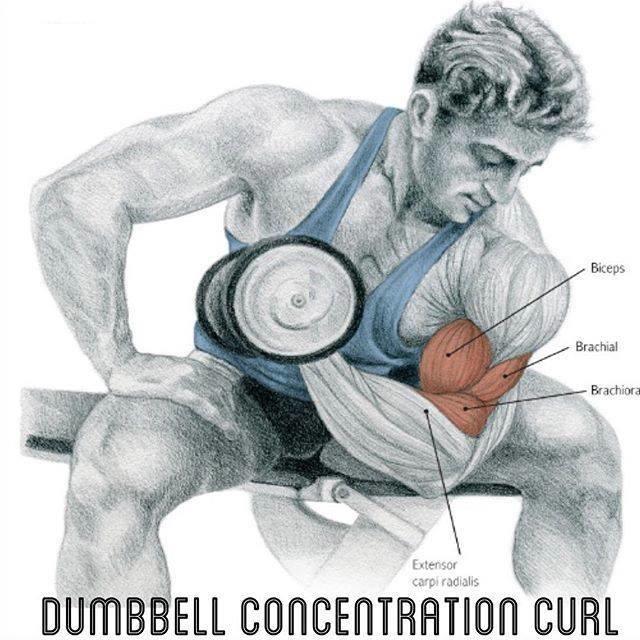 Exercícios de bíceps foto 9