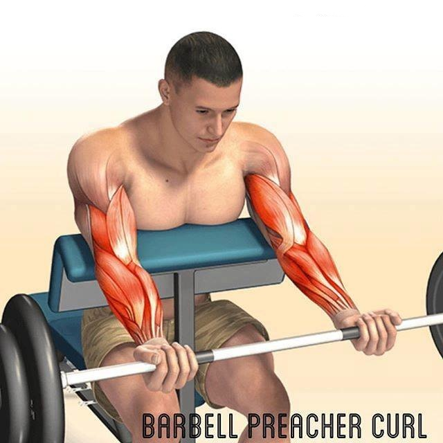 Exercícios de bíceps 1