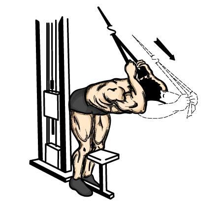 Exercícios para tríceps foto 7