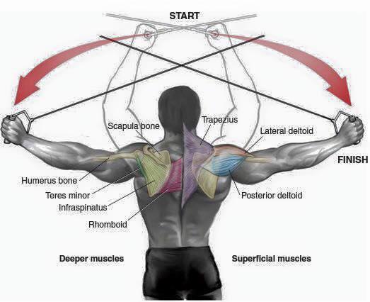 Exercícios treino ombro