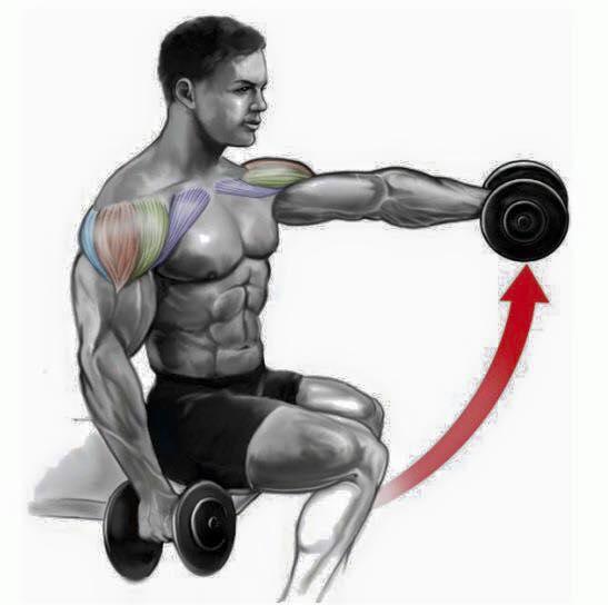 Exercícios treino ombro 1