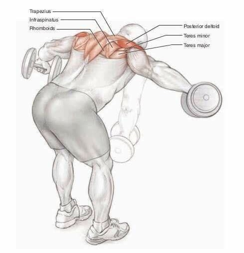 Treino Ombros - vários exercícios 1